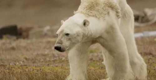 как медведь и бурундук дружить перестали нанайская сказка